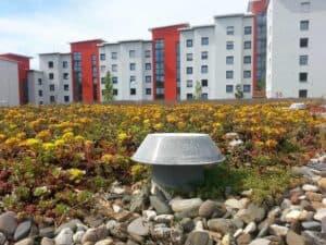 Modern und ökologisch: Ein begrüntes Flachdach