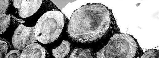 6 Fakten übers Holz, die jeder Handwerker wissen sollte