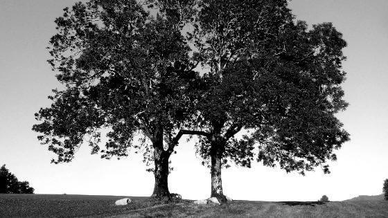 holzarten-eschenholz-beitragsbild