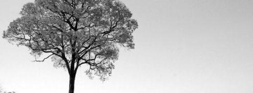 Ipe Holz – perfekt für Terrassendielen