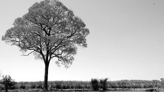 holzarten-ipeholz-beitragsbild