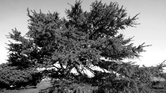 holzarten-laerchenholz-beitragsbild