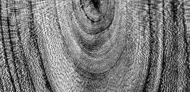 holzarten-maserung-eichenholz