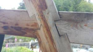 Schwalbenschwanz Verbindung an zwei Riegeln
