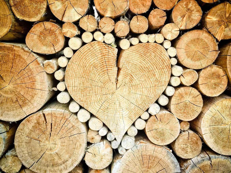 6 Fakten übers Holz Die Jeder Handwerker Wissen Sollte Baubeaver