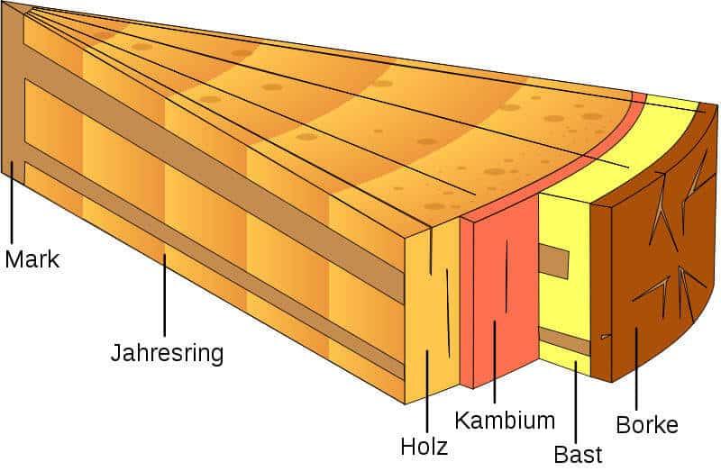 6 fakten bers holz die jeder handwerker wissen sollte baubeaver. Black Bedroom Furniture Sets. Home Design Ideas